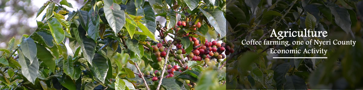 agriculture-coffe-farming
