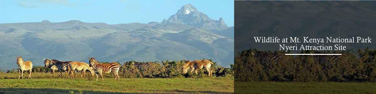 wildlife-at-mt-kenya-nyeri-attraction-site
